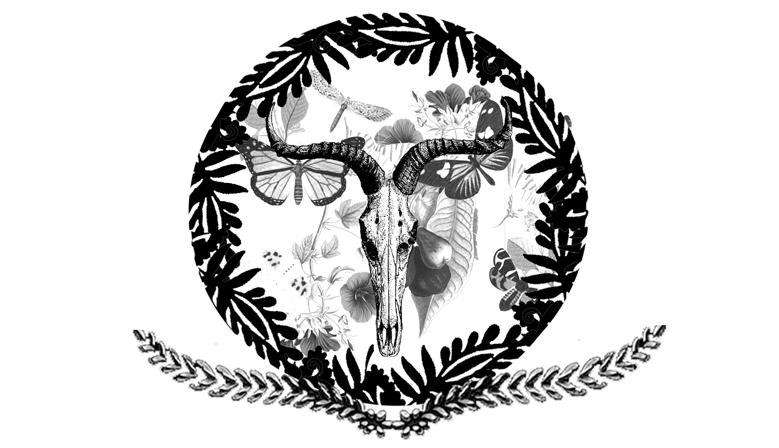imprimé Antilope